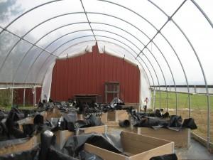 IMG_3750-greenhouse
